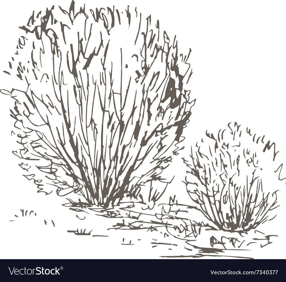 Willow Bushes With Leaves And Grass Royalty Free Vector