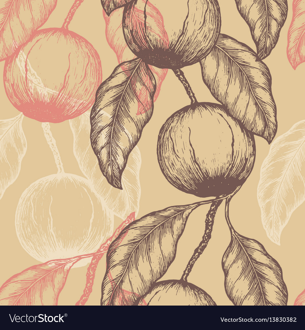 Hand drawn brazil nuts seamless pattern branch of