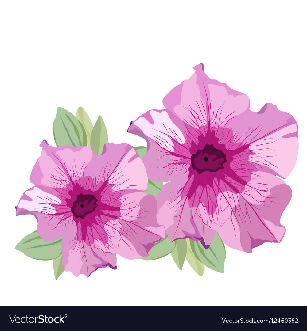 Pink Summer flowers isolated on white Royalty Free Vector