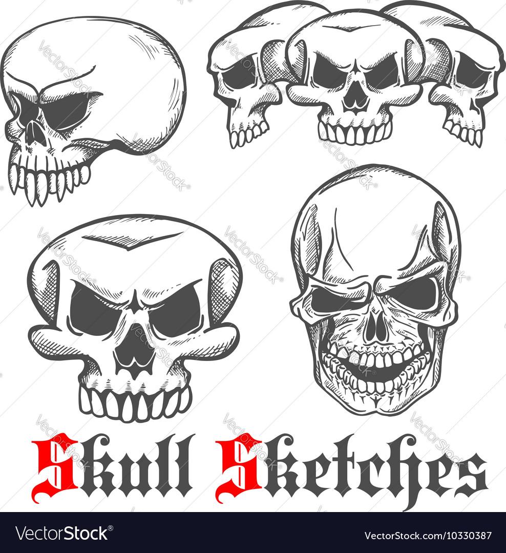 Human skulls and monster cranium sketches