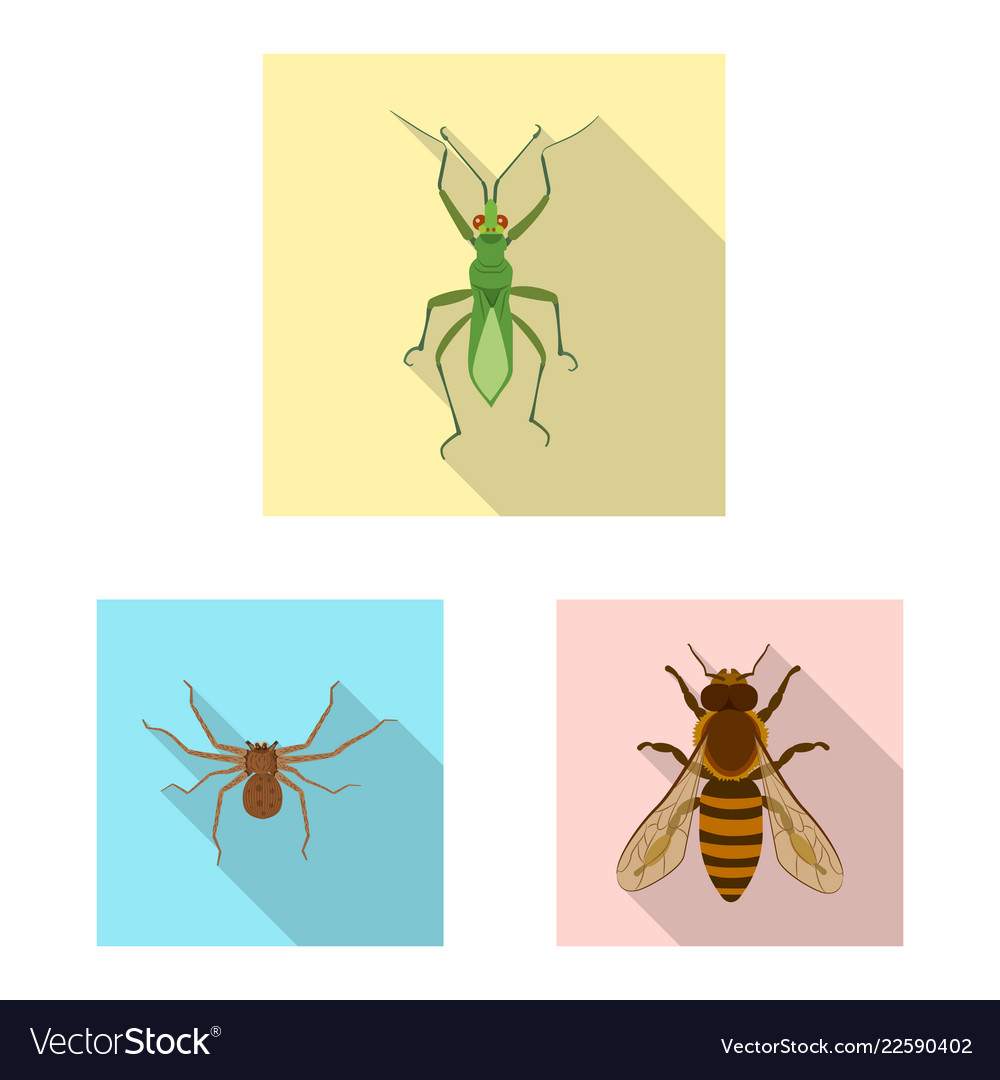 Design of insect and fly symbol set of