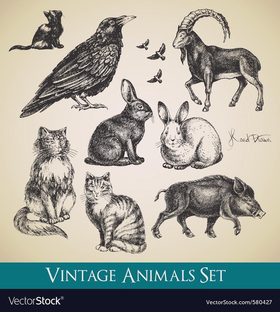 Vintage animals vector image