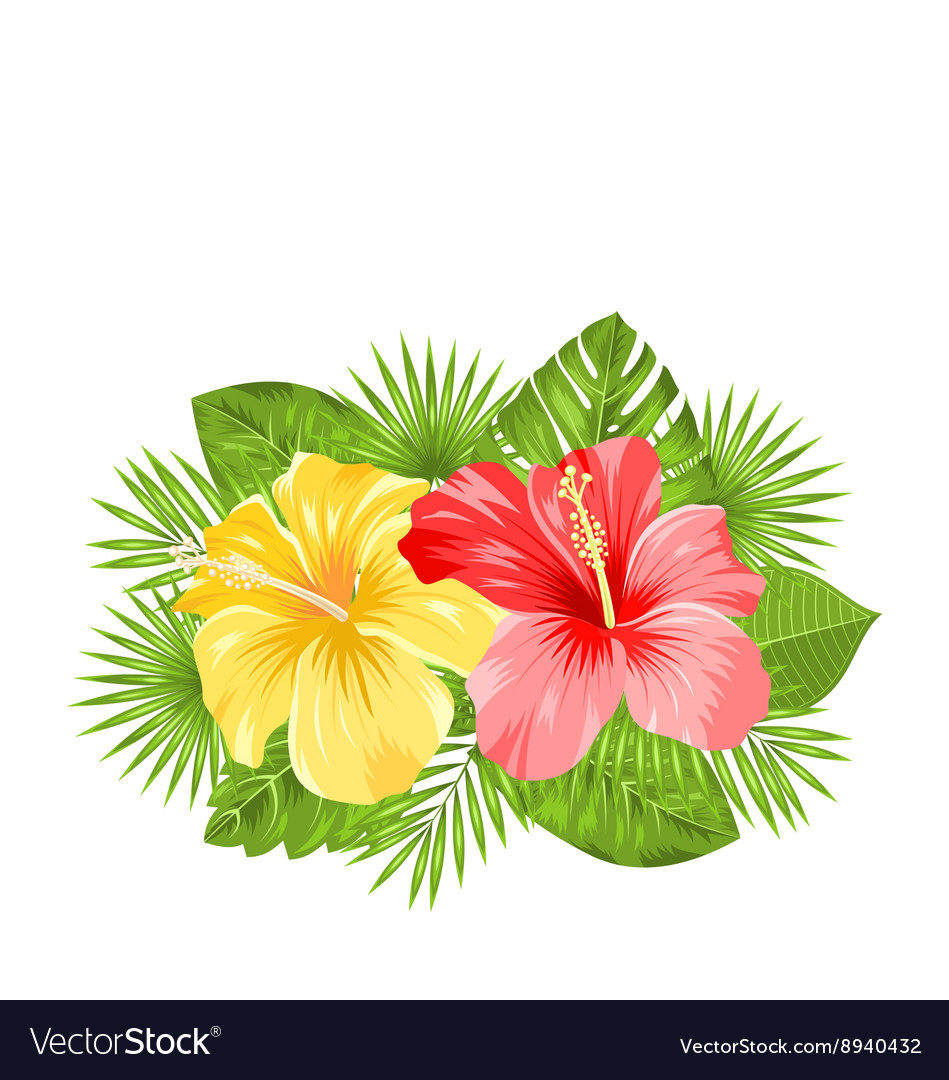 Beautiful Colorful Hibiscus Flowers Blossom and