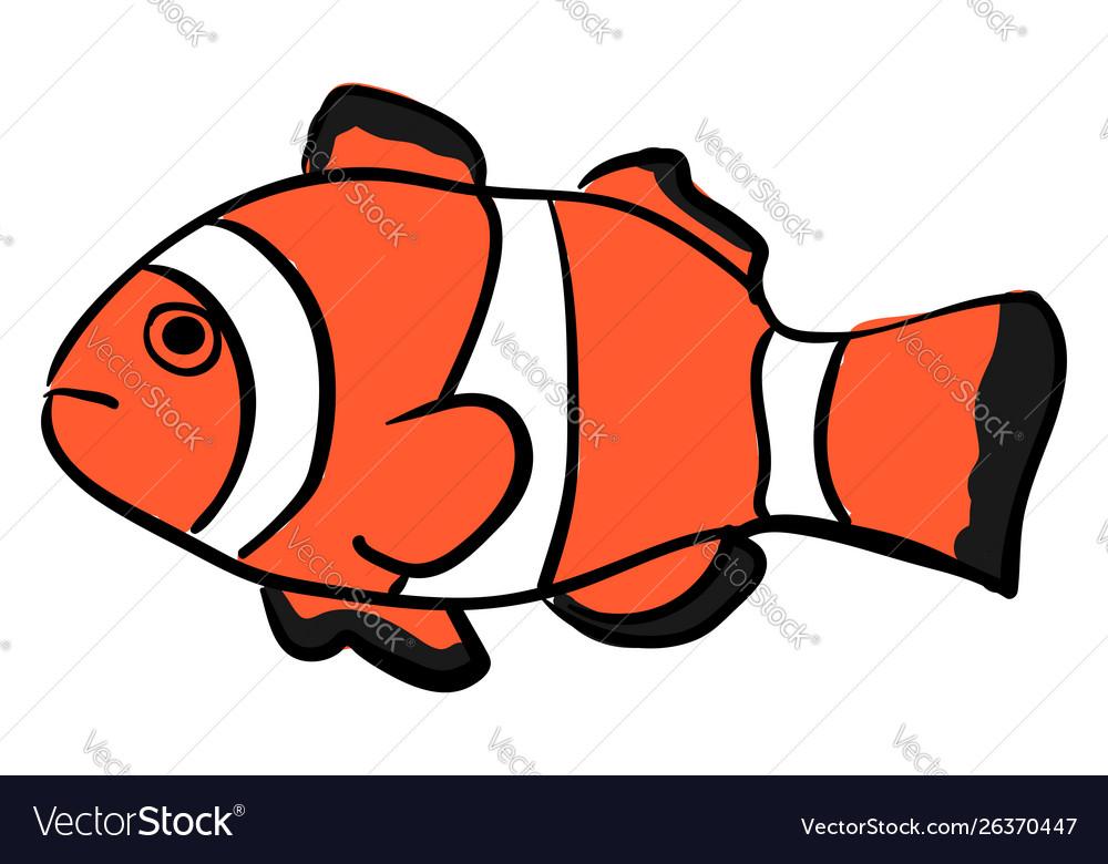 Clownfish on white background