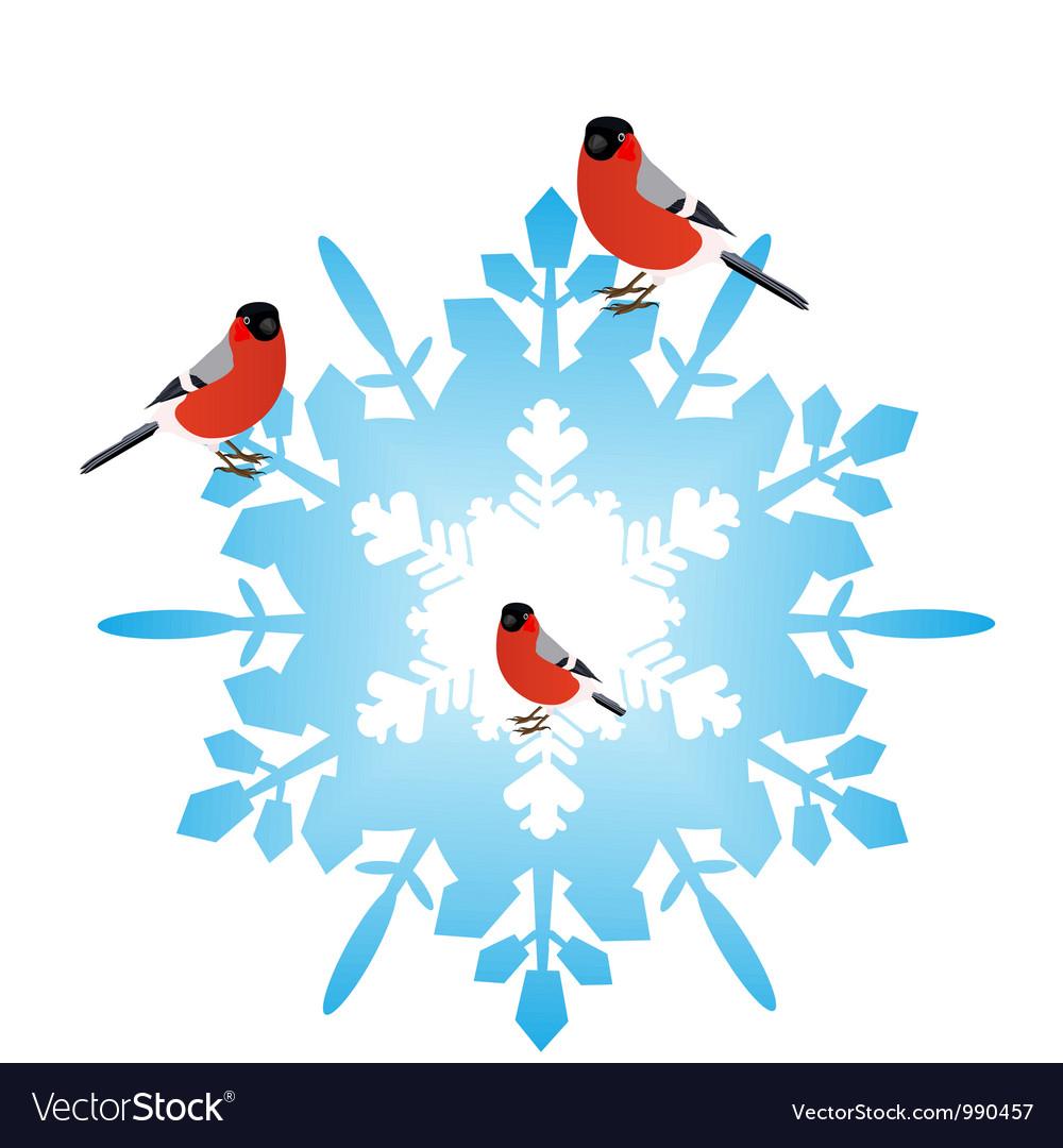 Bullfinches on a snowflake vector image