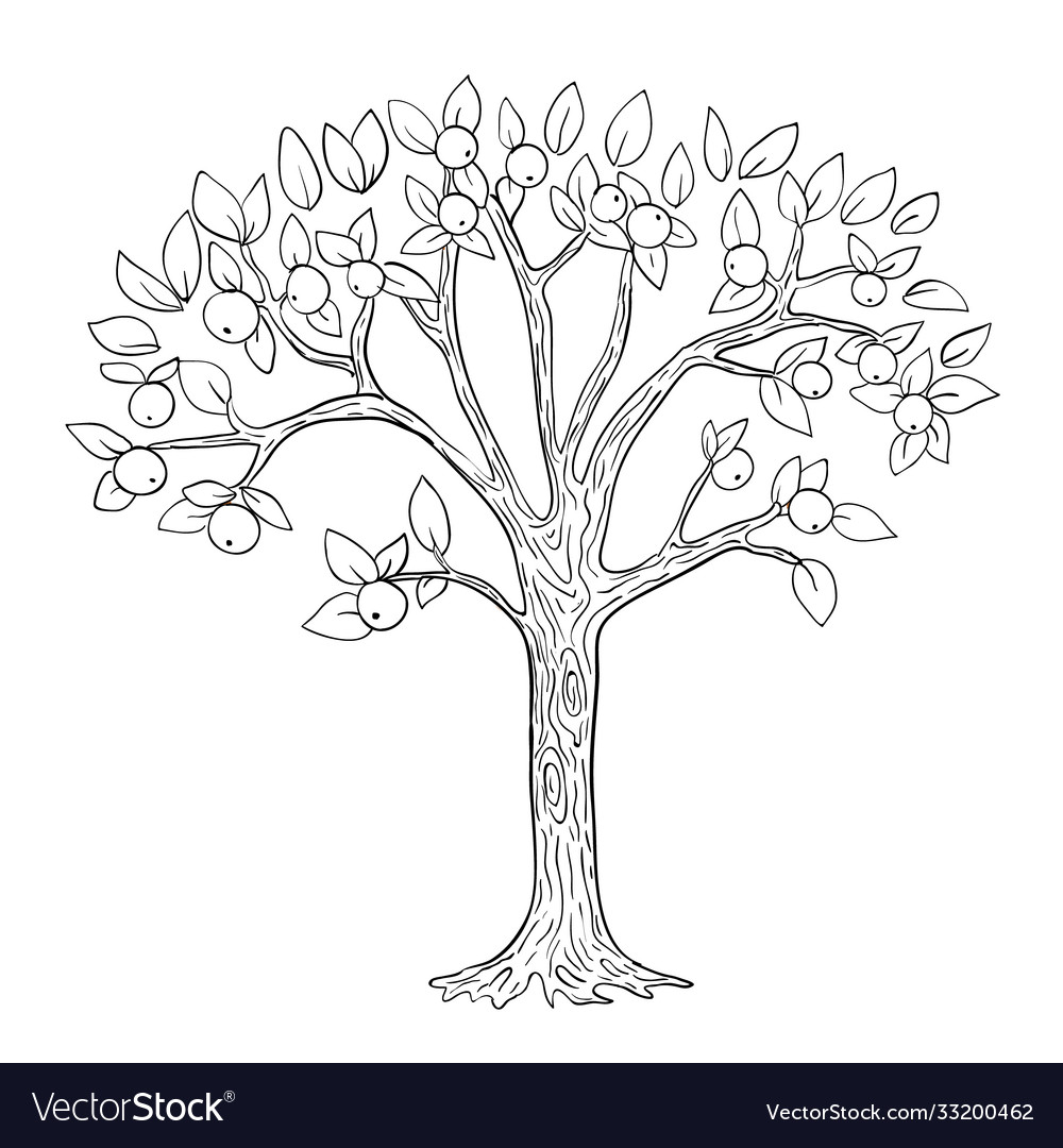 Apple Tree Coloring Page Vector Images 61