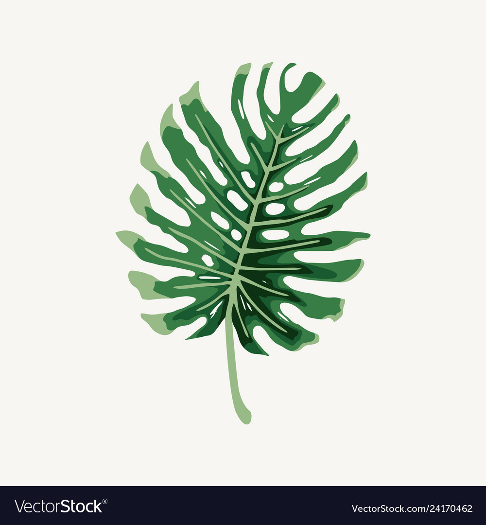 Monstera Tropical Leaf Outline Royalty Free Vector Image It looked very nice and healthy. vectorstock