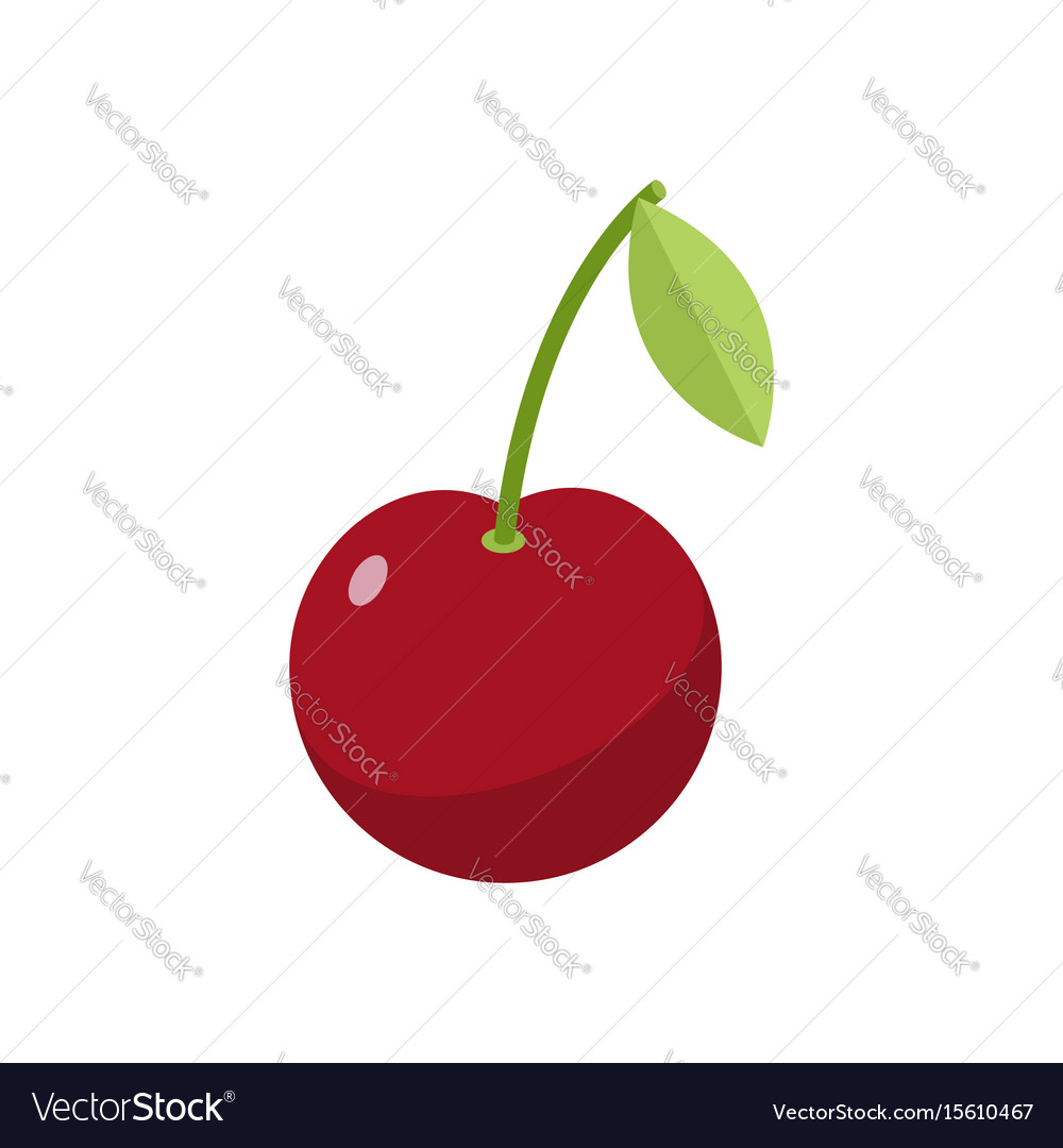 Cherries isolated cherry on white background red vector image
