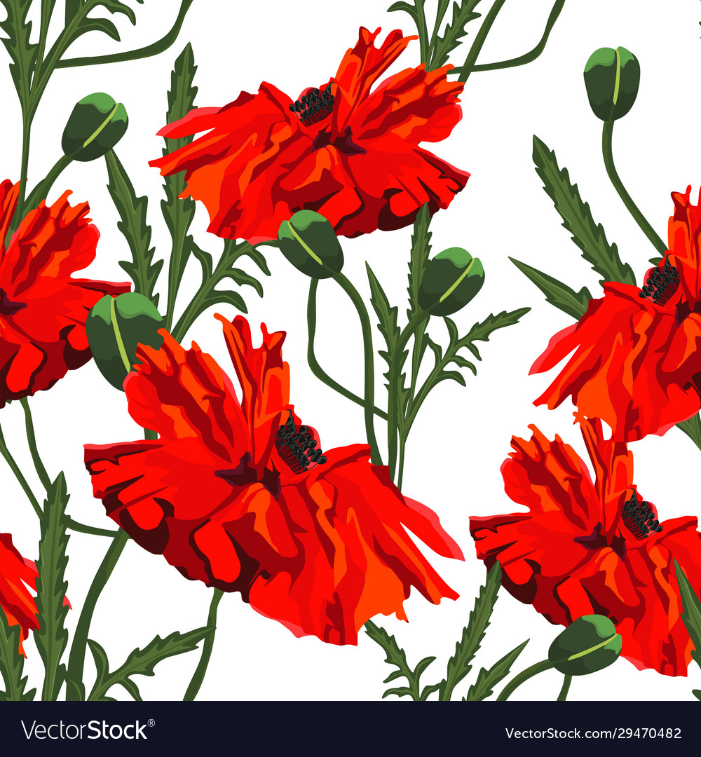 Beautiful red poppies flowers pattern