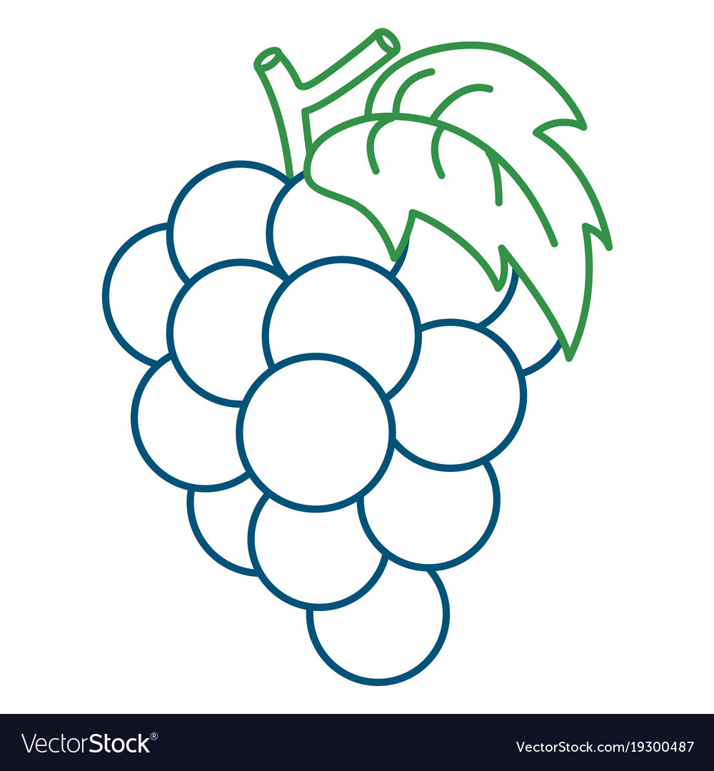 Coloring page of grape Royalty Free Vector Image