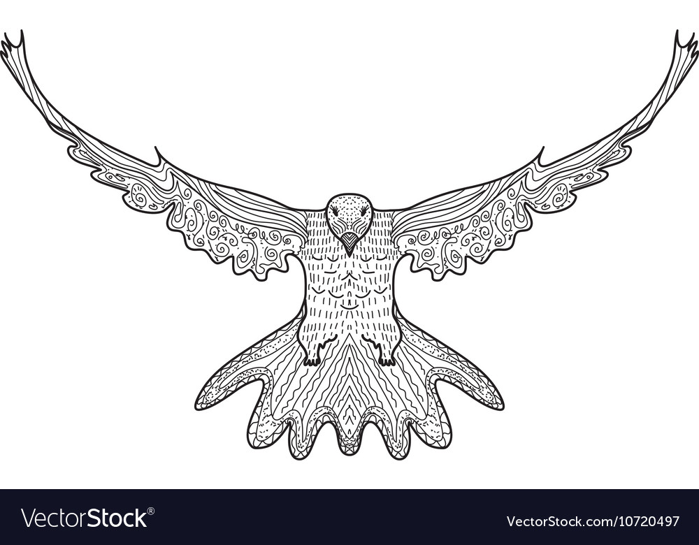 bird dove flying eagle doodle hand drawing doodles