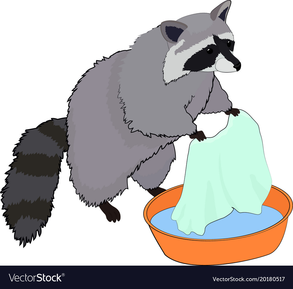 Cute raccoon washes clothes vector image
