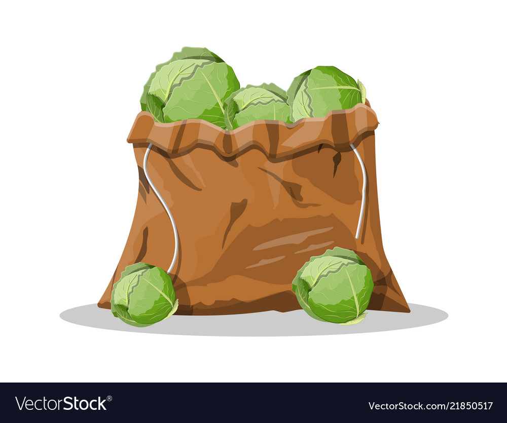 Fresh cabbage with green leaves in canvas bag