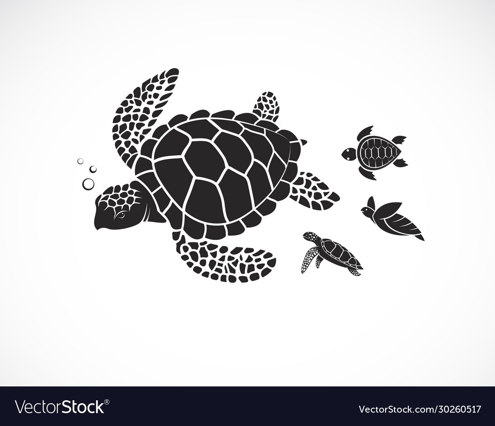 Mother turtle and baturtle on a white
