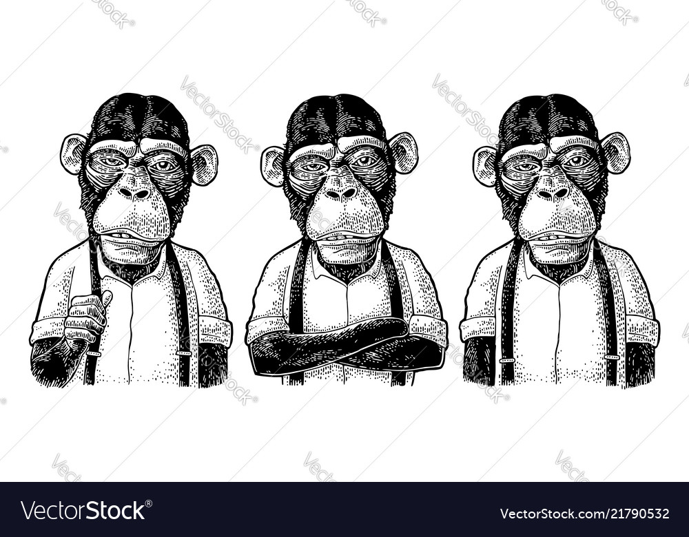 Monkey businessman in shirt and suspender