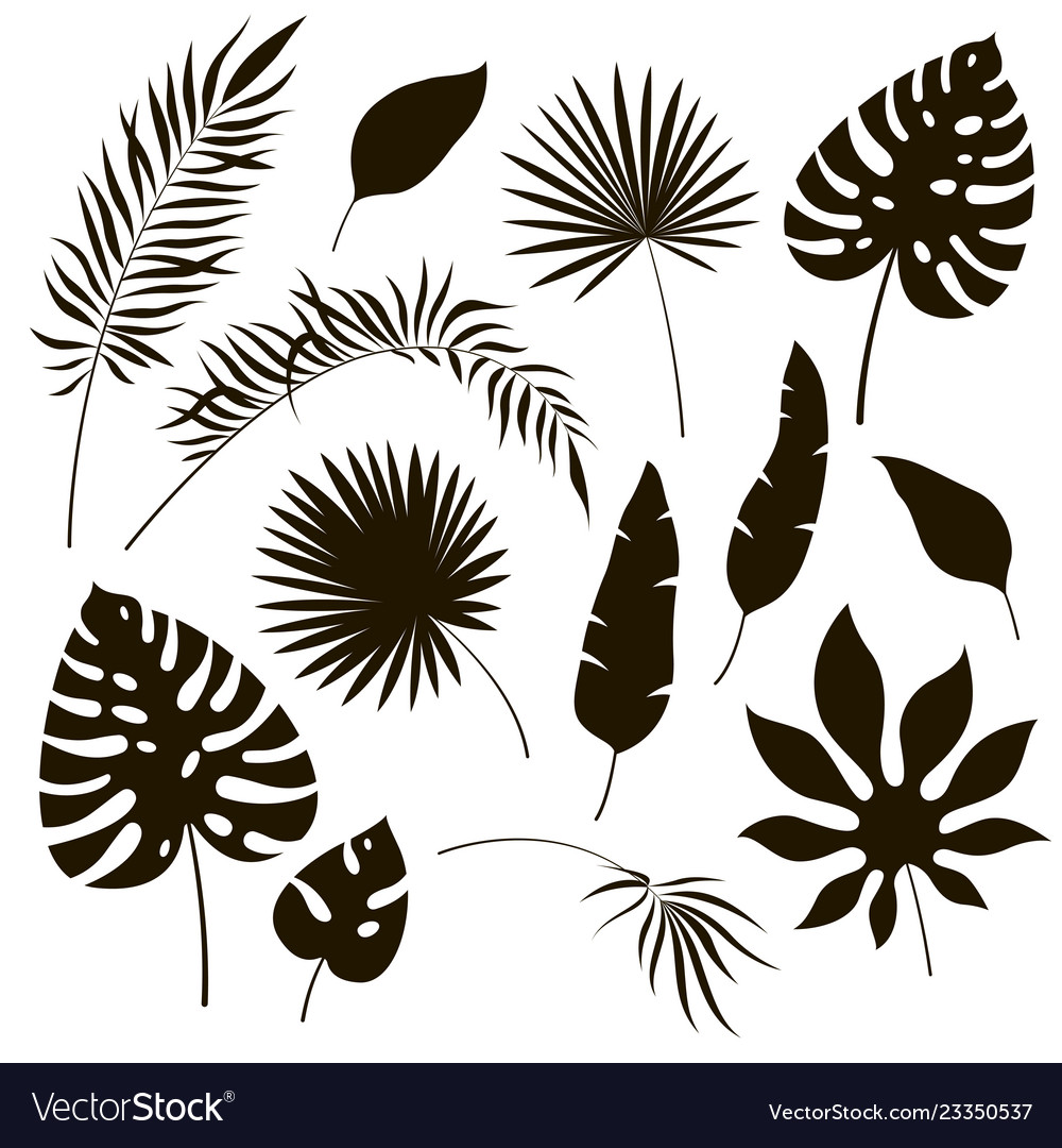 Tropical leaves silhouettes black jungle exotic