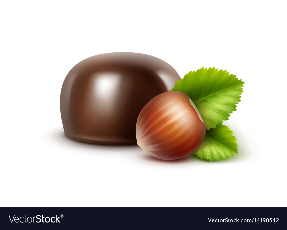 Dark black bitter chocolate candy with hazelnuts vector image
