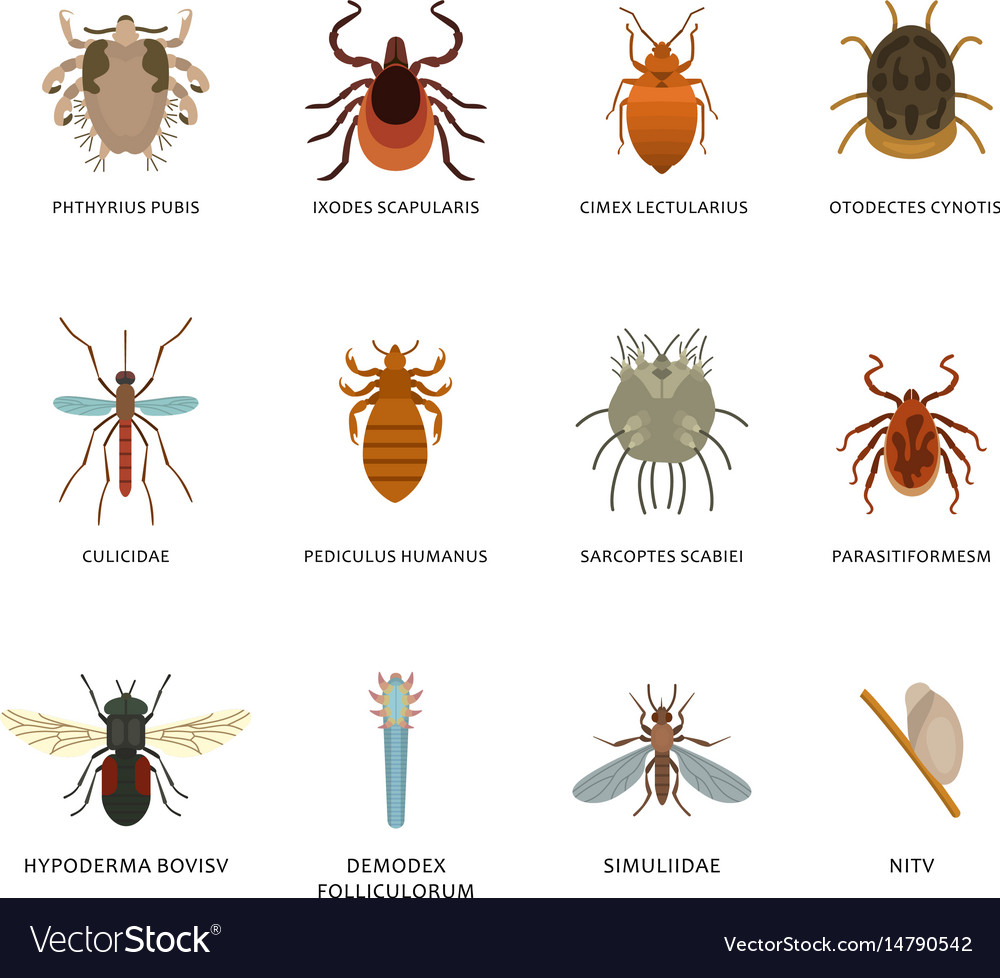 Human skin parasites and housing pests insects