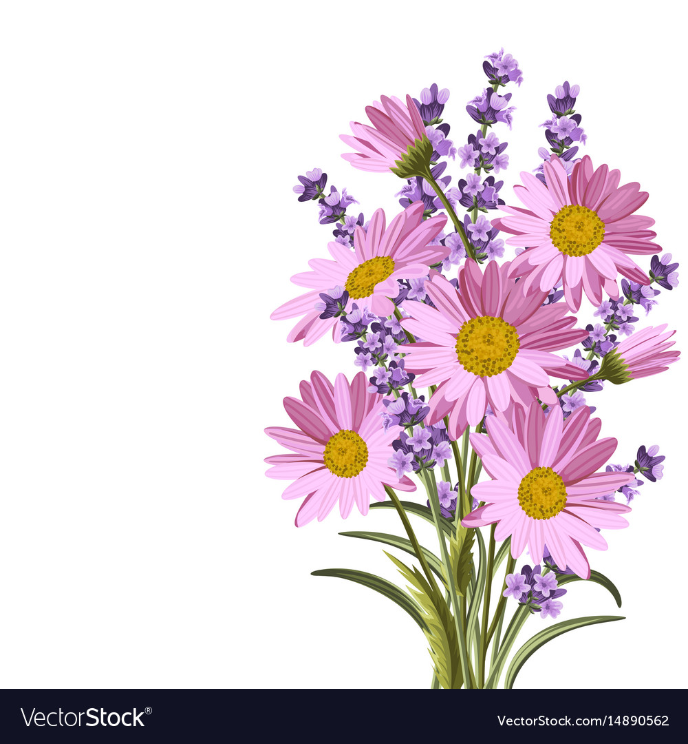 Beautiful daisies and lavender flowers royalty free vector beautiful daisies and lavender flowers vector image izmirmasajfo