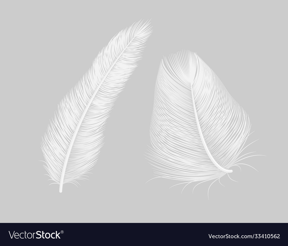 Feather quill icon background bird