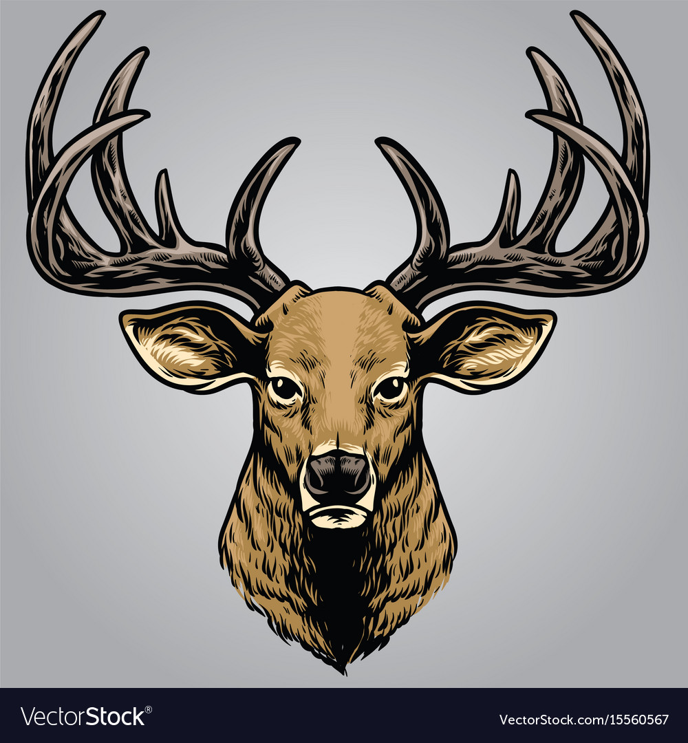 Hand drawing style of deer head vector image