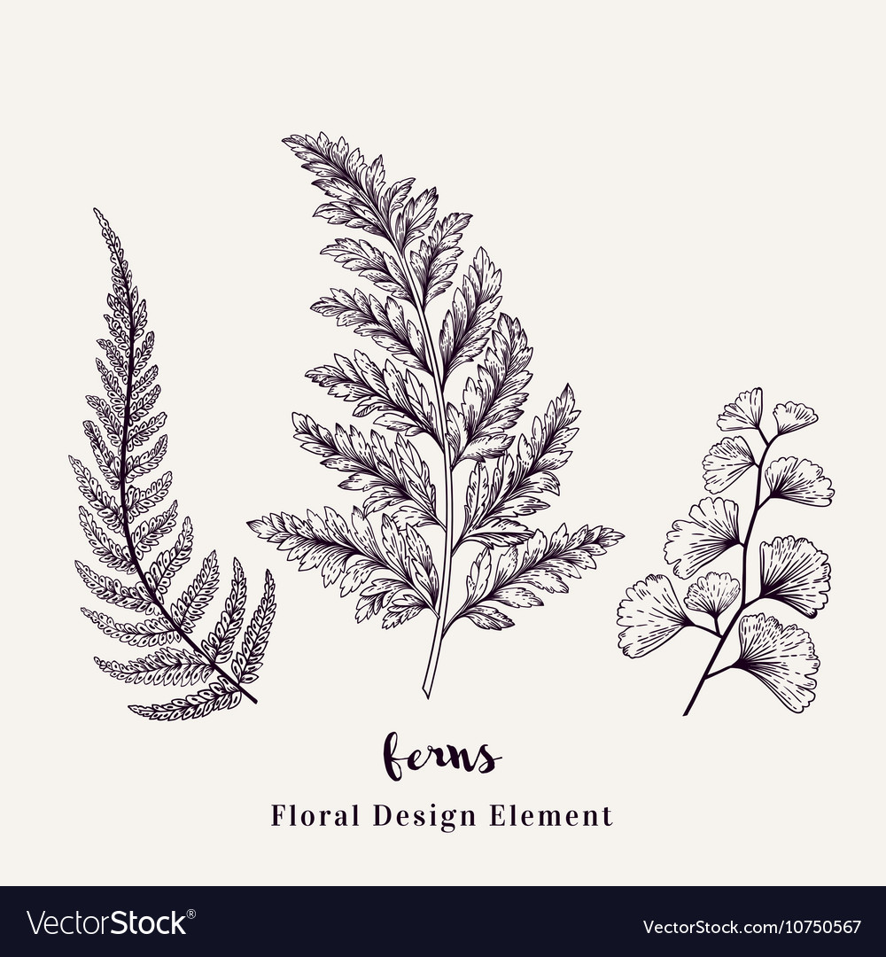 Set with ferns Plants with leaves isolated