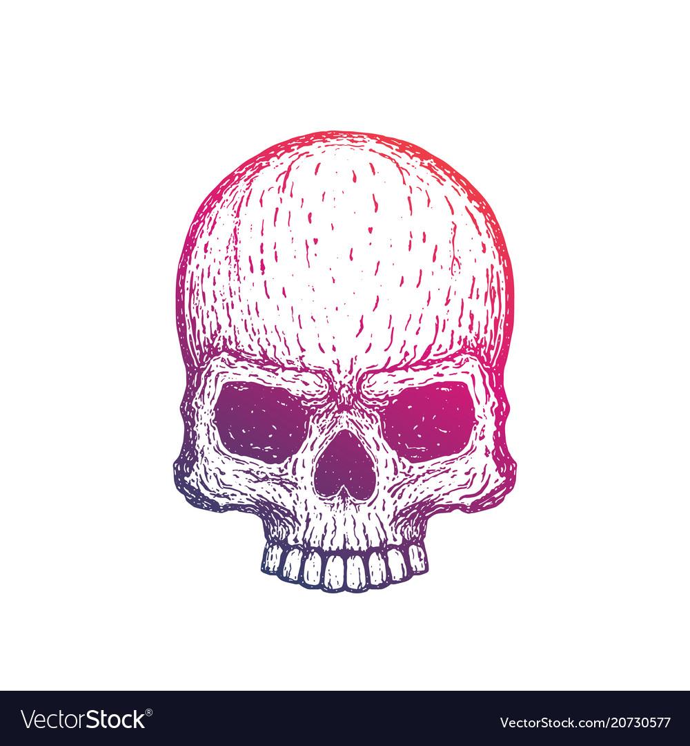Skull hand drawn vector image