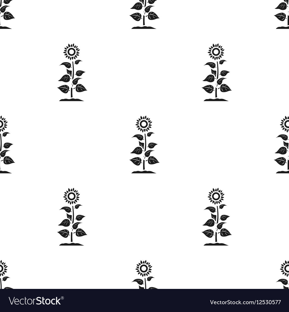 Sunflower icon in black style isolated on white