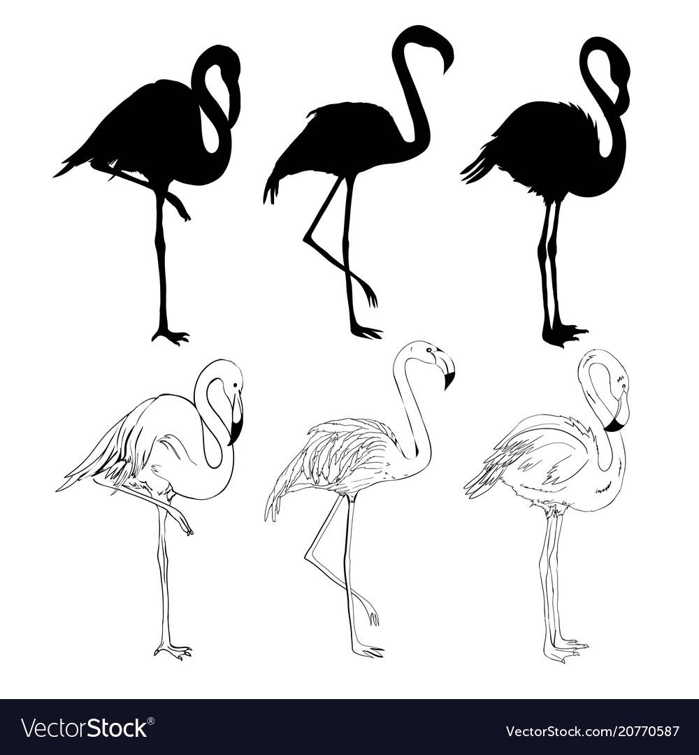 Hand drawing flamingos vector image