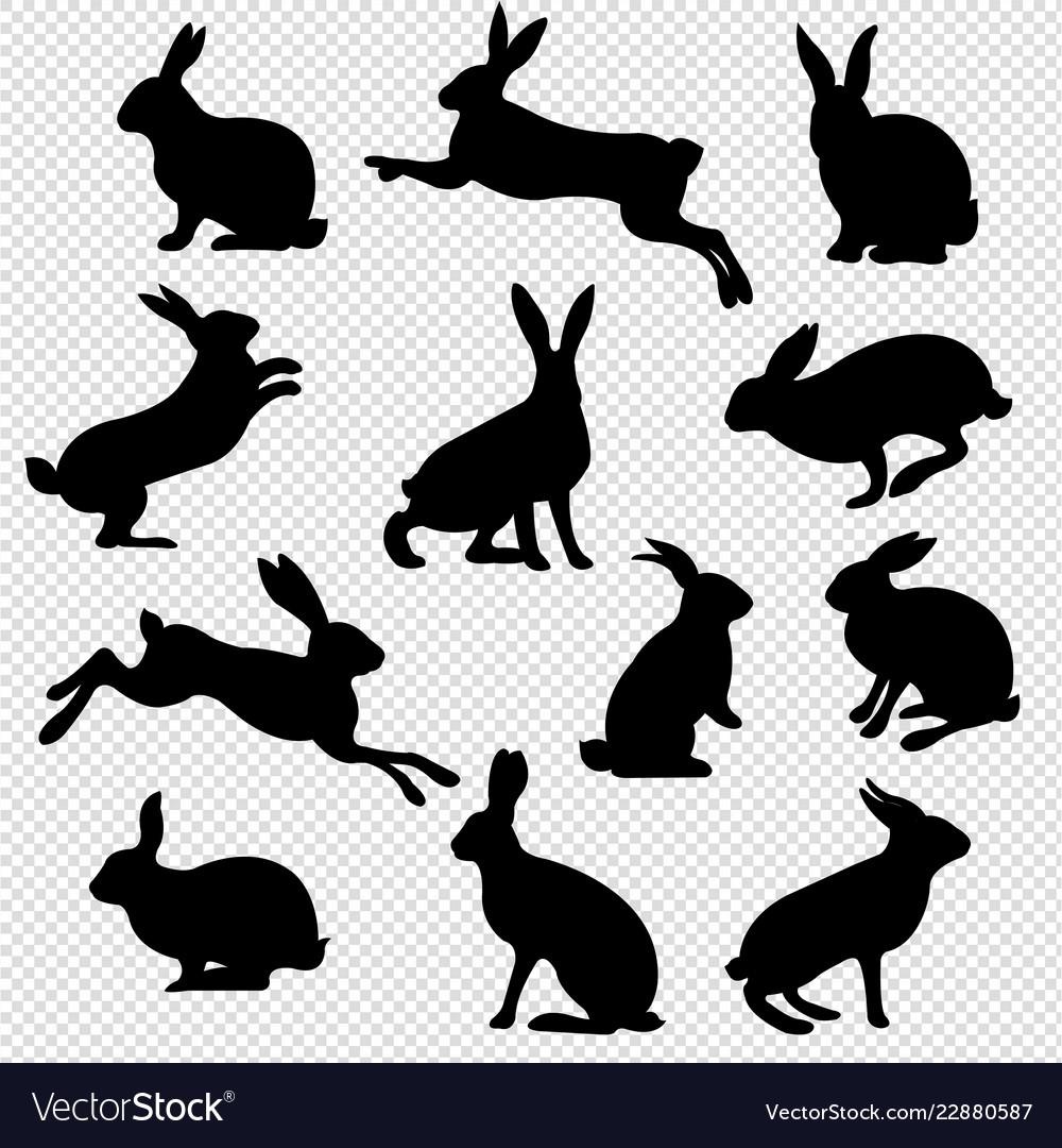 Rabbit set isolated transparent background