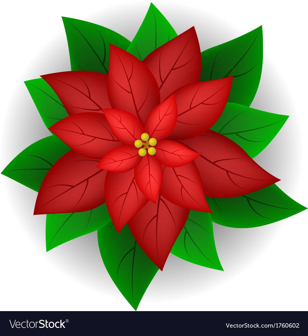 Poinsettia Flower Royalty Free Vector Image Vectorstock