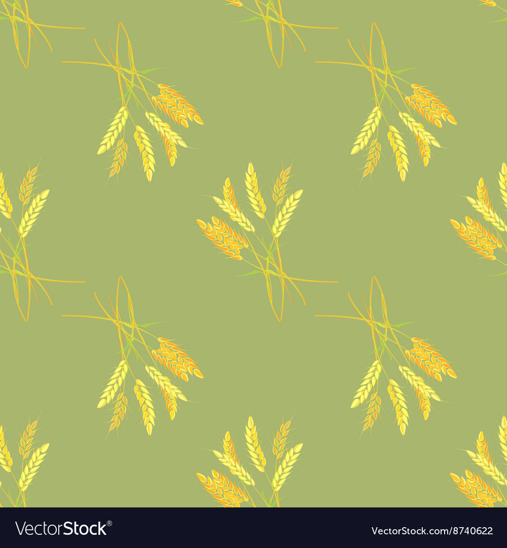 Agriculture grain Sheaf of Wheat vector image