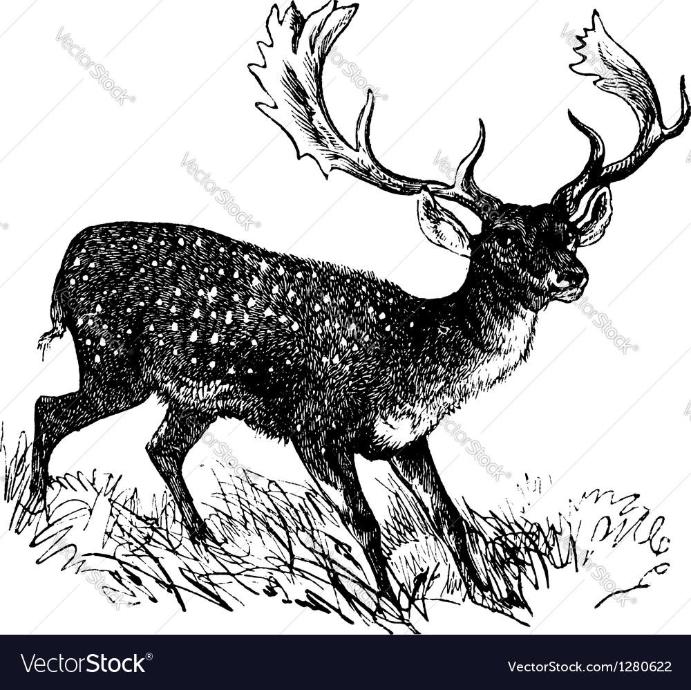 Fallow Deer vintage engraving Royalty Free Vector Image