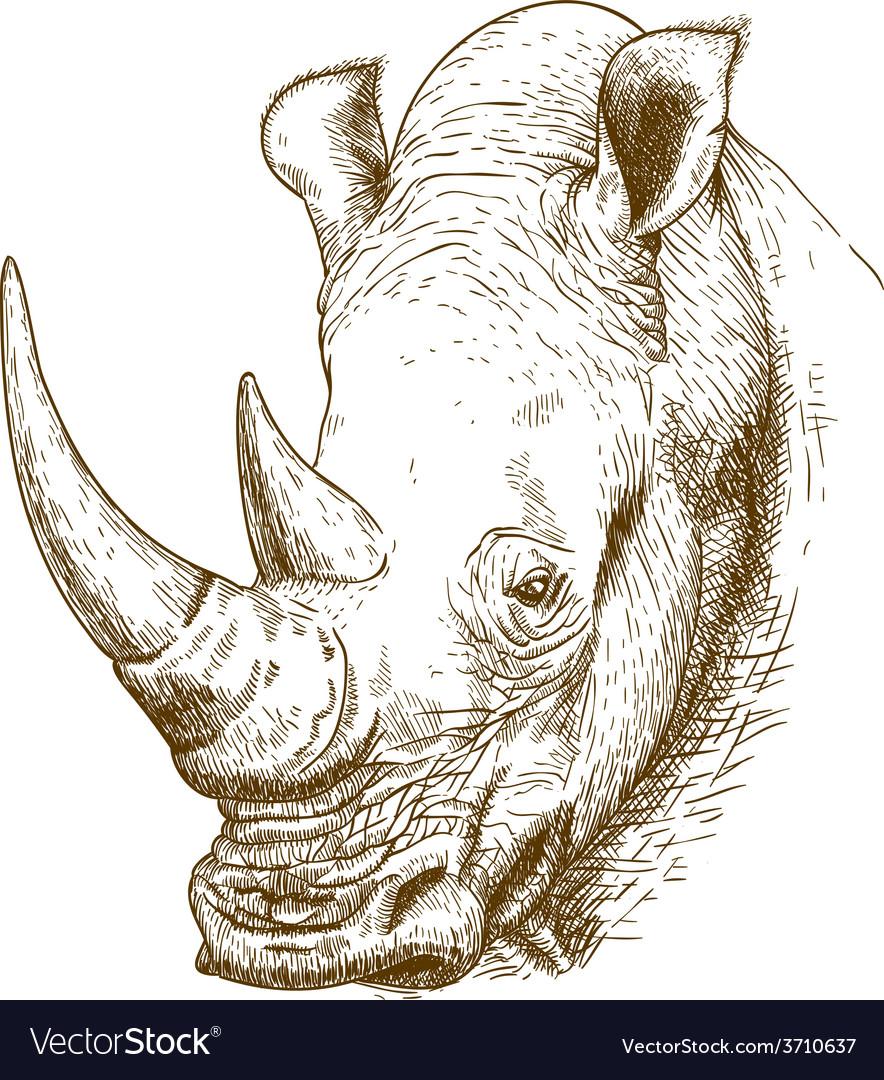Engraving rhino