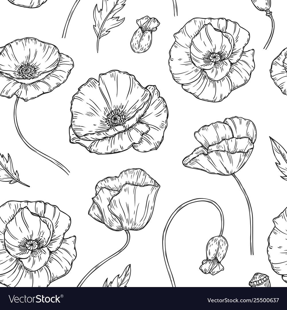 Poppy seamless pattern poppies flower sketch