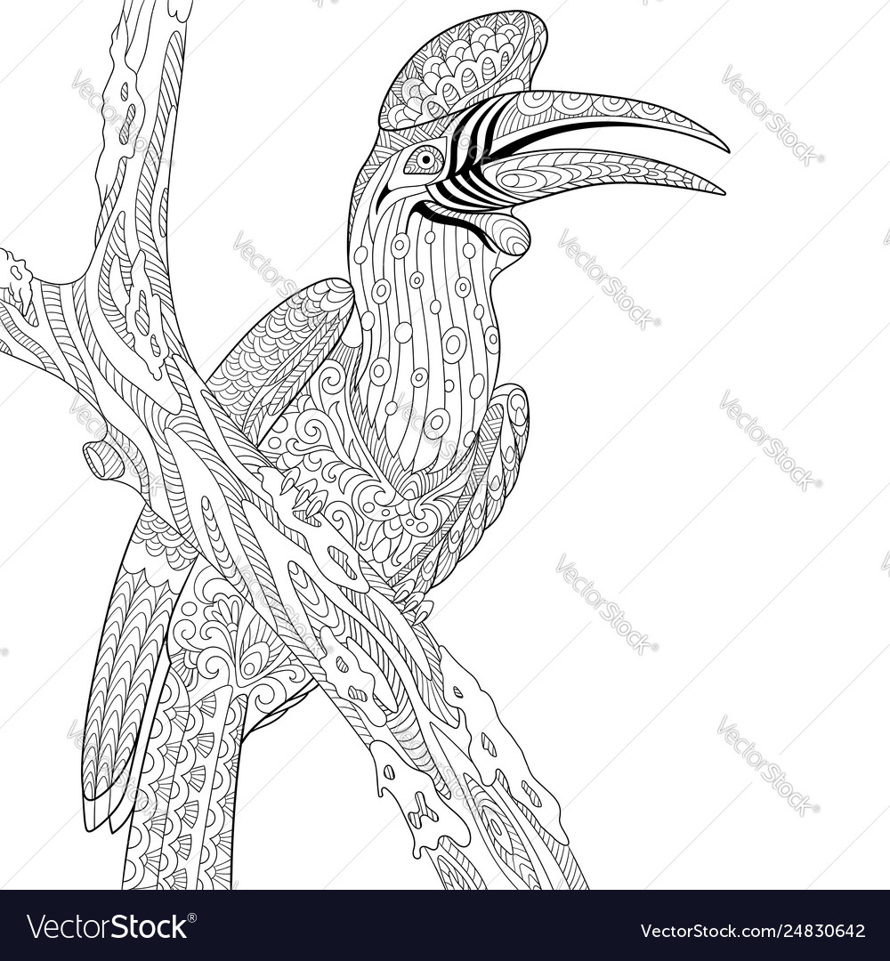 Hornbill bird adult coloring page