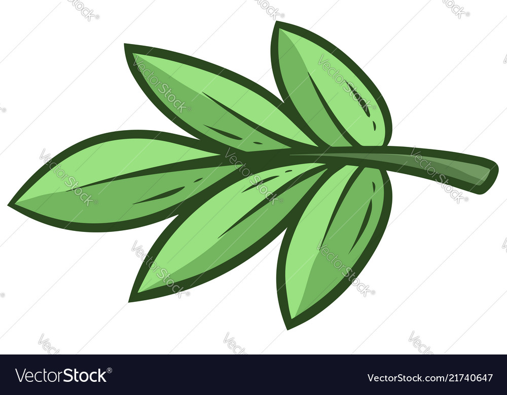 Cartoon green branch and leaves of eucalyptus