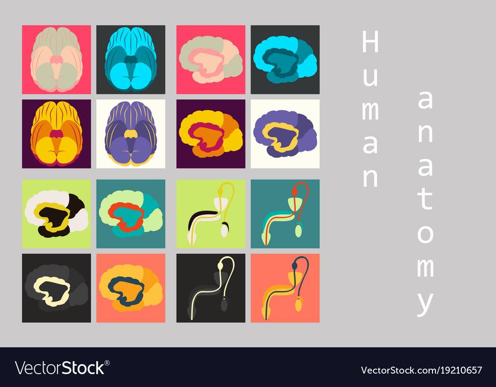 Human body internal organs medical flat isolated Vector Image