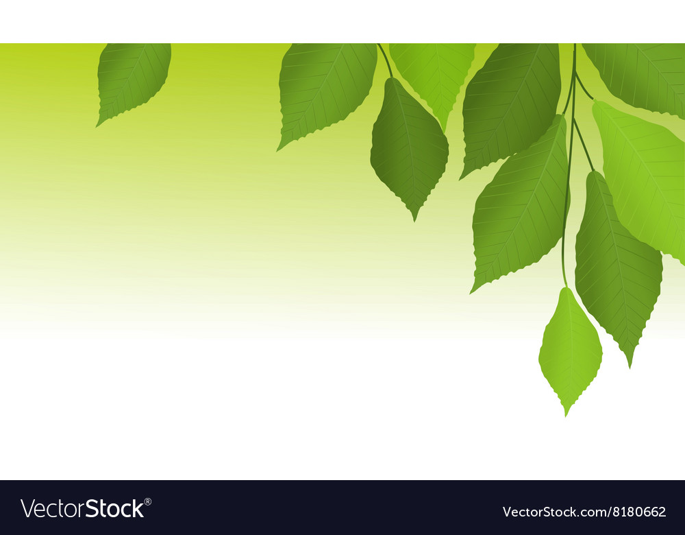 Nature background with tree leaves
