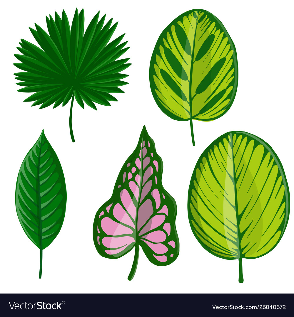 Drawing Tropical Leaf Royalty Free Vector Image 1000 x 1080 jpeg 348 кб. vectorstock