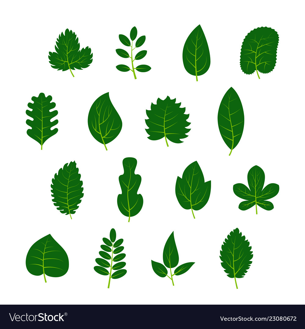 Set of sixteen green leaves on white background
