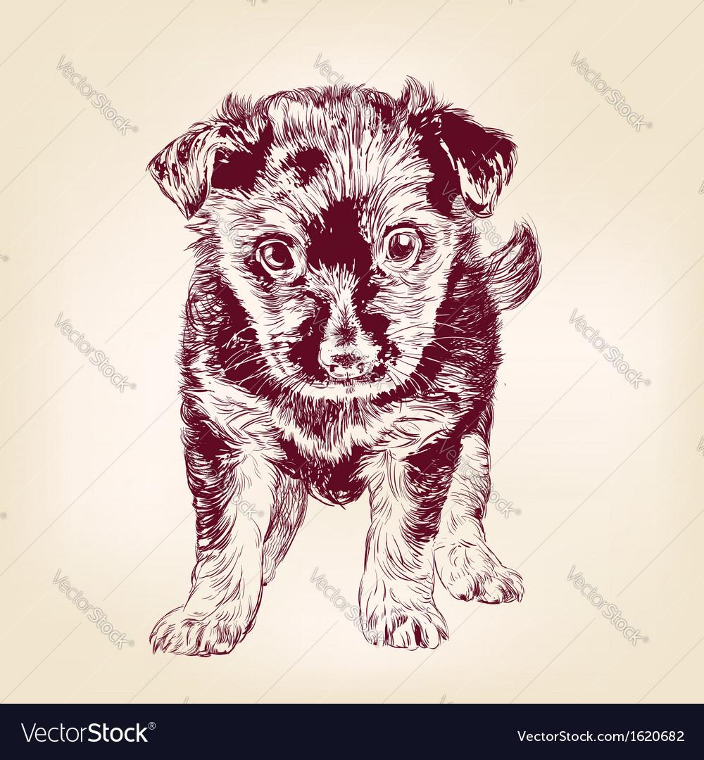 Puppy dog hand drawn llustration