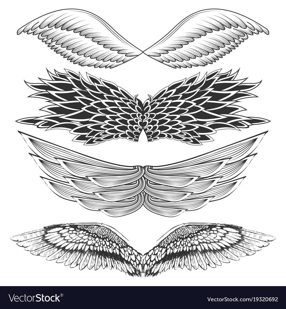 Tattoo art design of different gothic wing