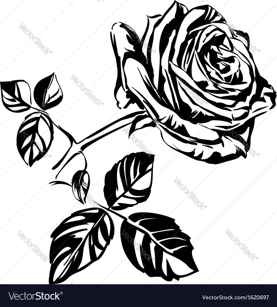 hand drawn roses royalty free vector image vectorstock rh vectorstock com rose vector eps rose vector eps