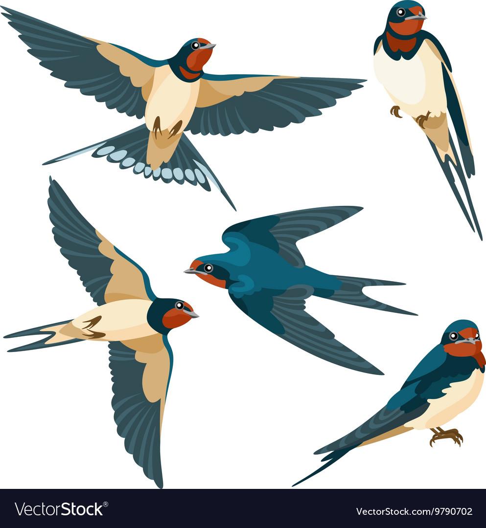 Swallows on white background