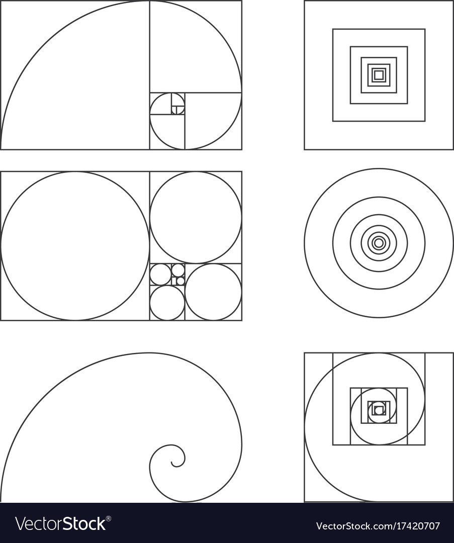 golden ratio template fibonacci royalty free vector image