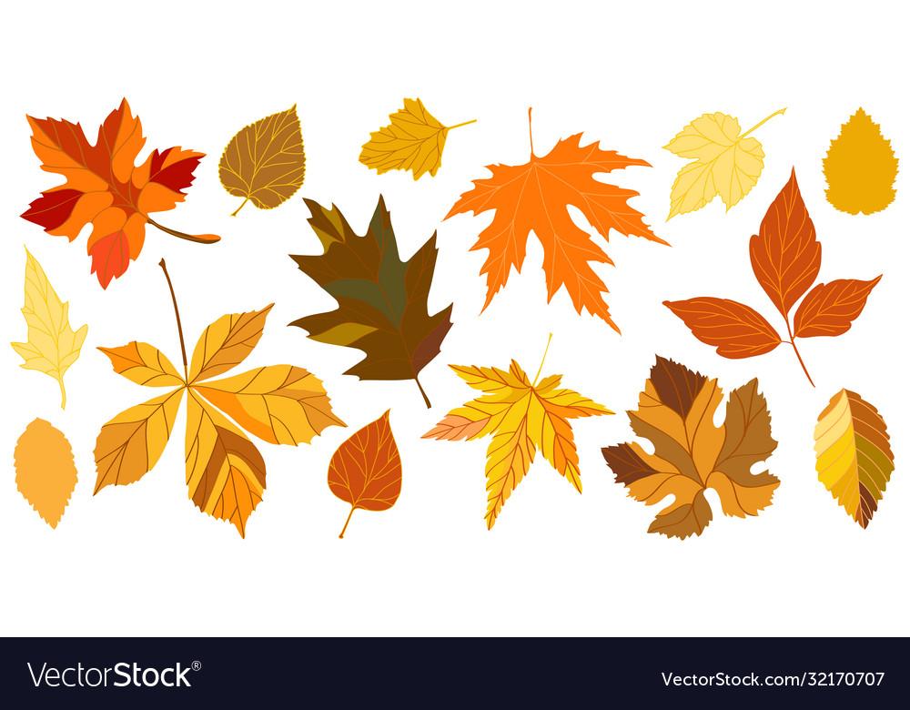 Yellow autumn falling leaves