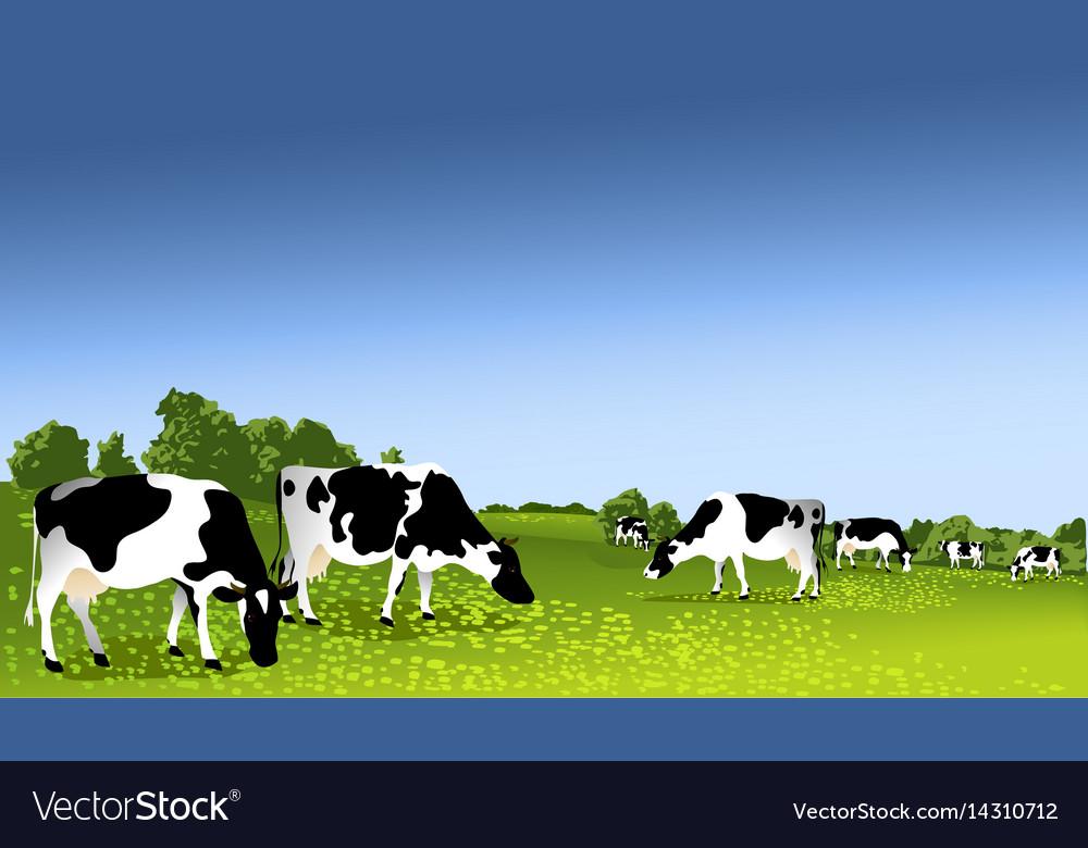 Cows in paddock vector image
