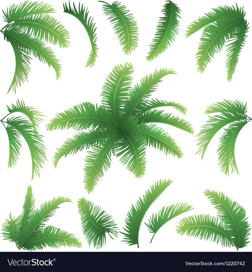 Branches of palm trees