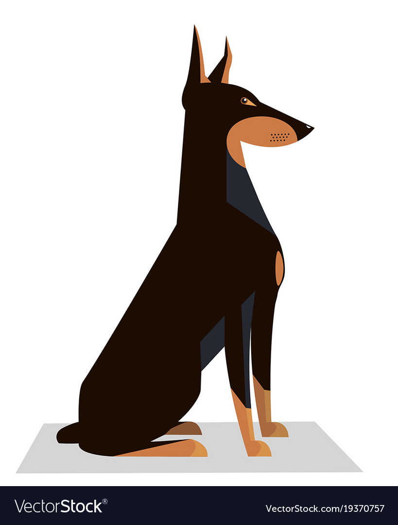 Doberman sits on a white background
